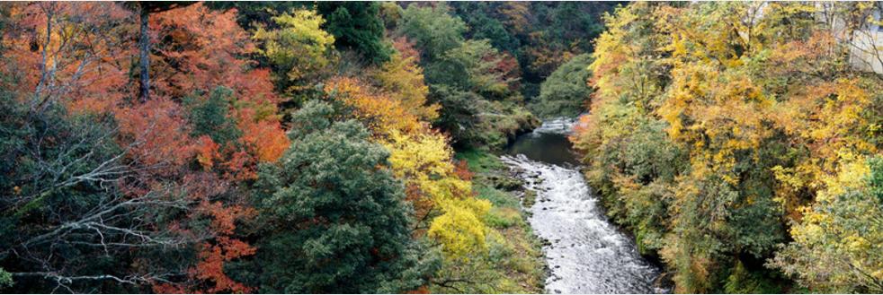 Yamanaka Autumn daytrip from Kanazawa