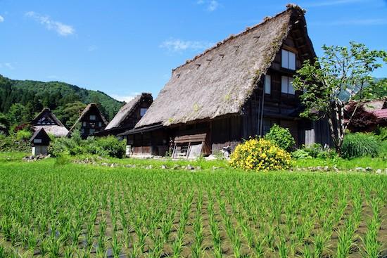 Thatched roofs of shirakawago