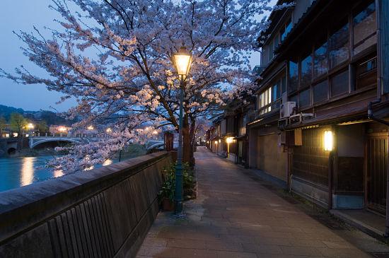 Kanazawa Night Cherry Tour