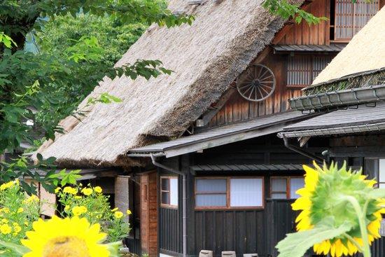 Shirakawago Spring Flowers